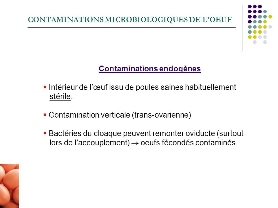 Contaminations endogènes Intérieur de lœuf issu de poules saines habituellement stérile. Contamination verticale (trans-ovarienne) Bactéries du cloaqu