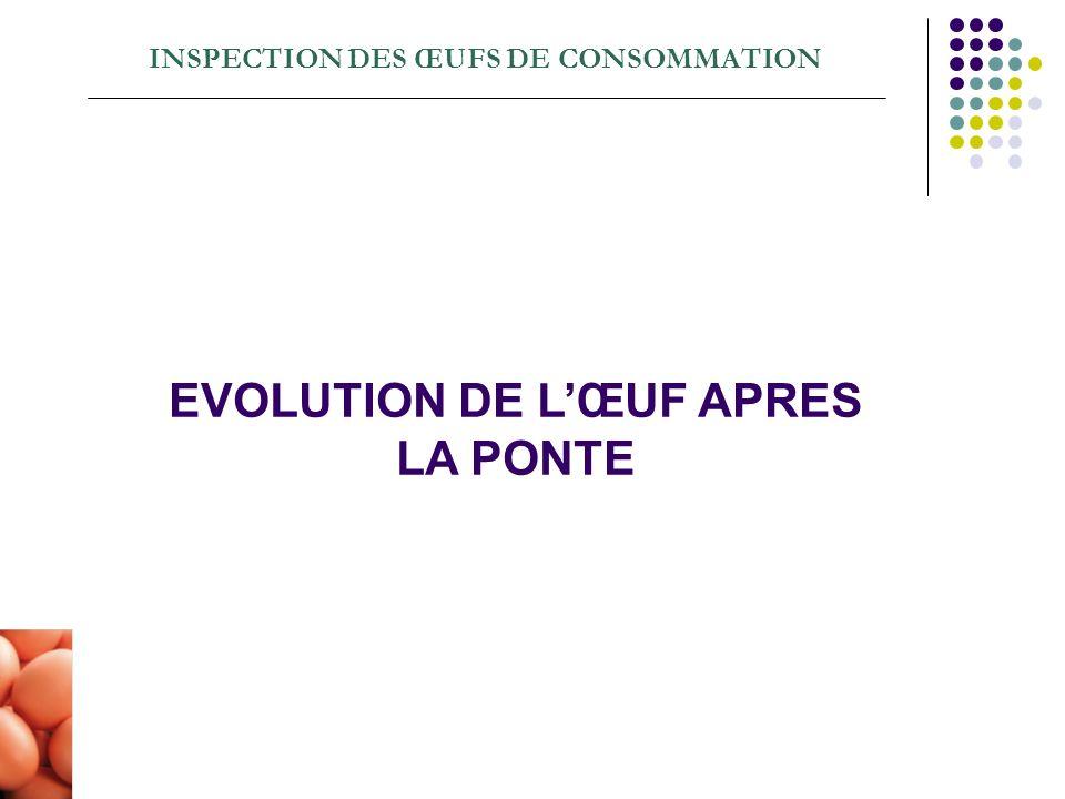 INSPECTION DES ŒUFS DE CONSOMMATION EVOLUTION DE LŒUF APRES LA PONTE