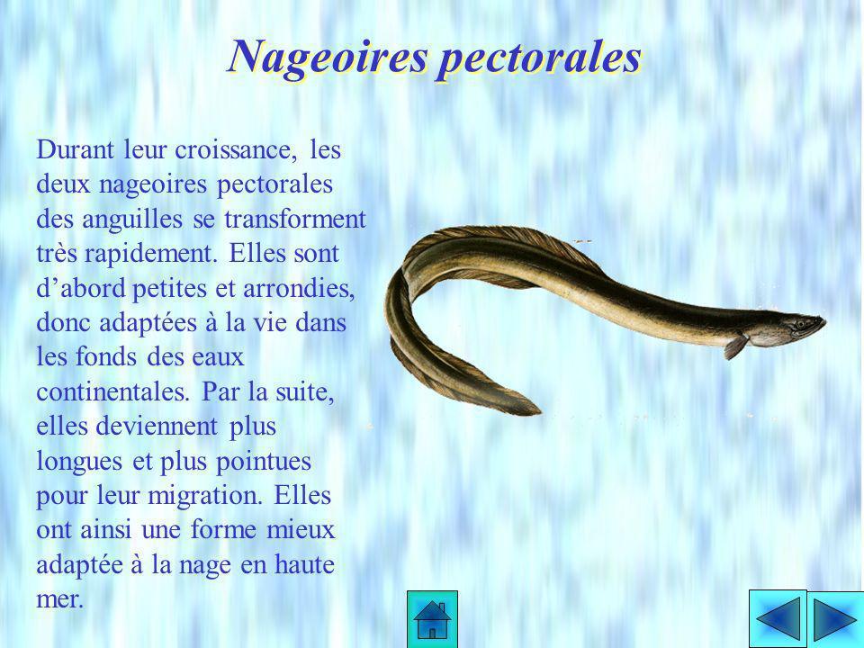 Ils se nourrissent dinvertébrés aquatiques, poissons et rarement de mammifères ou oiseaux noyés. Leur alimentation