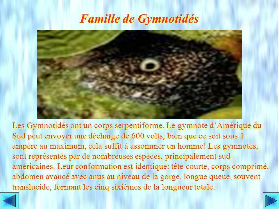Ordre des Apodes: les Anguilles Les Anguilles sont dans lordre des Apodes. Leur majorité sont marines. Les Anguilles deau douce, les plus connues, son