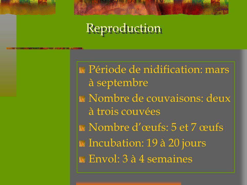 Reproduction Période de nidification: mars à septembre Nombre de couvaisons: deux à trois couvées Nombre dœufs: 5 et 7 œufs Incubation: 19 à 20 jours