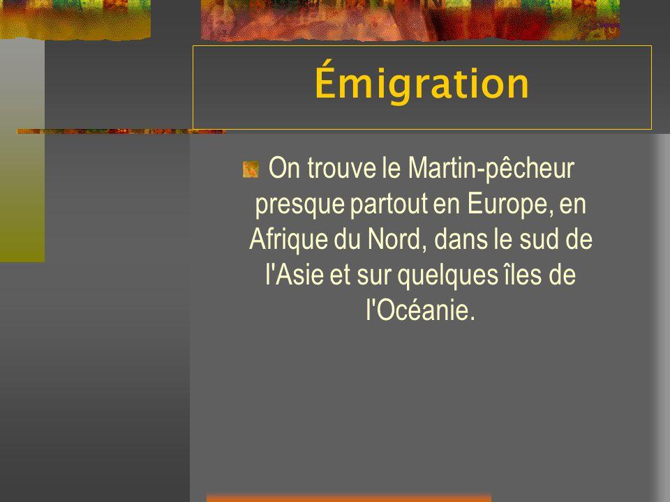 Émigration On trouve le Martin-pêcheur presque partout en Europe, en Afrique du Nord, dans le sud de l'Asie et sur quelques îles de l'Océanie.