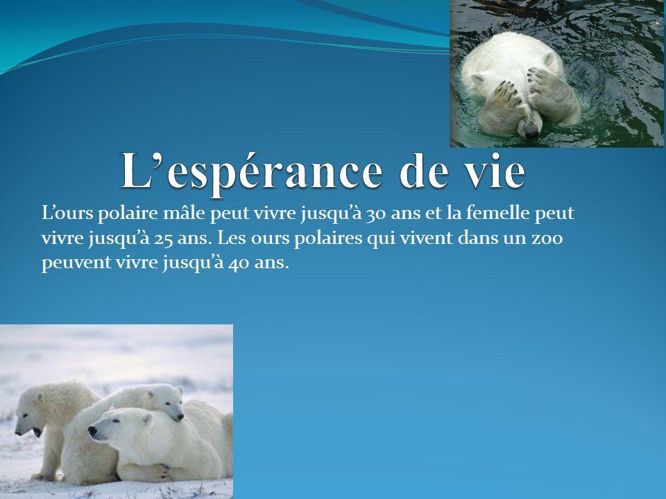 Lours polaire mâle peut vivre jusquà 30 ans et la femelle peut vivre jusquà 25 ans.