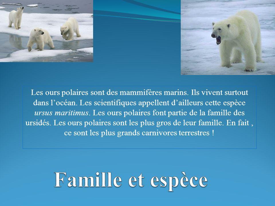 Les ours polaires sont des mammifères marins.Ils vivent surtout dans locéan.