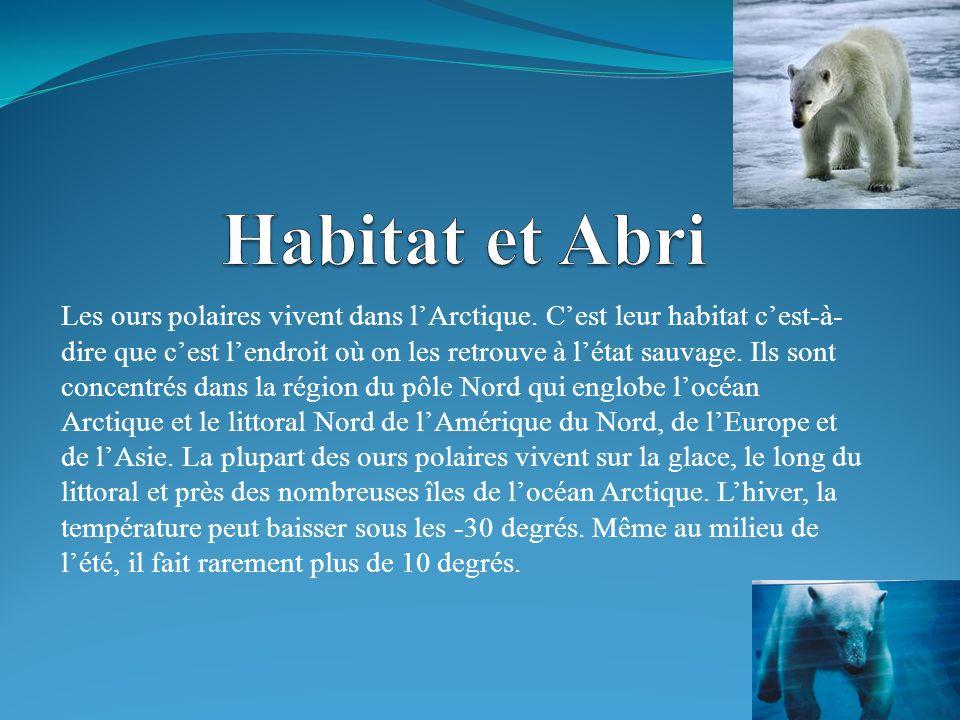 Les ours polaires vivent dans lArctique.
