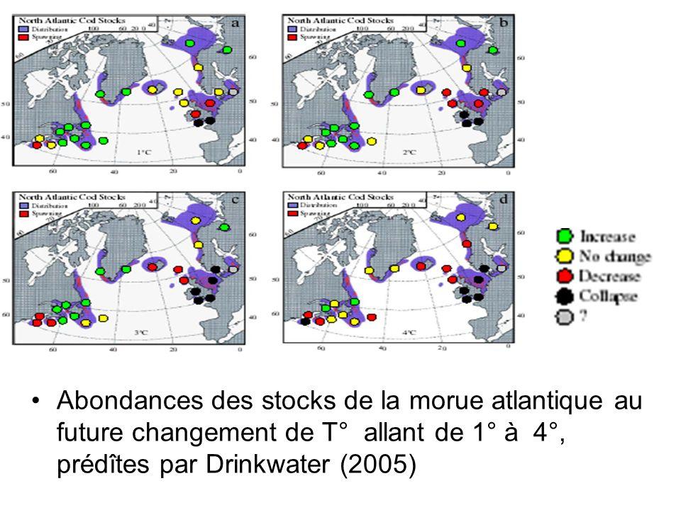 Abondances des stocks de la morue atlantique au future changement de T° allant de 1° à 4°, prédîtes par Drinkwater (2005)