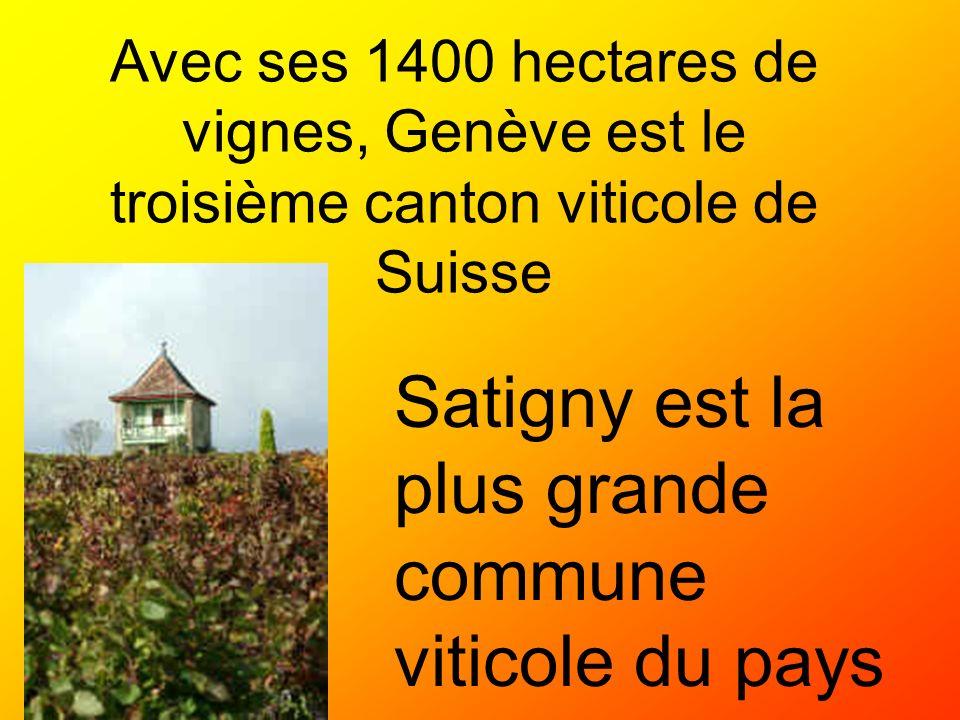 Avec ses 1400 hectares de vignes, Genève est le troisième canton viticole de Suisse Satigny est la plus grande commune viticole du pays