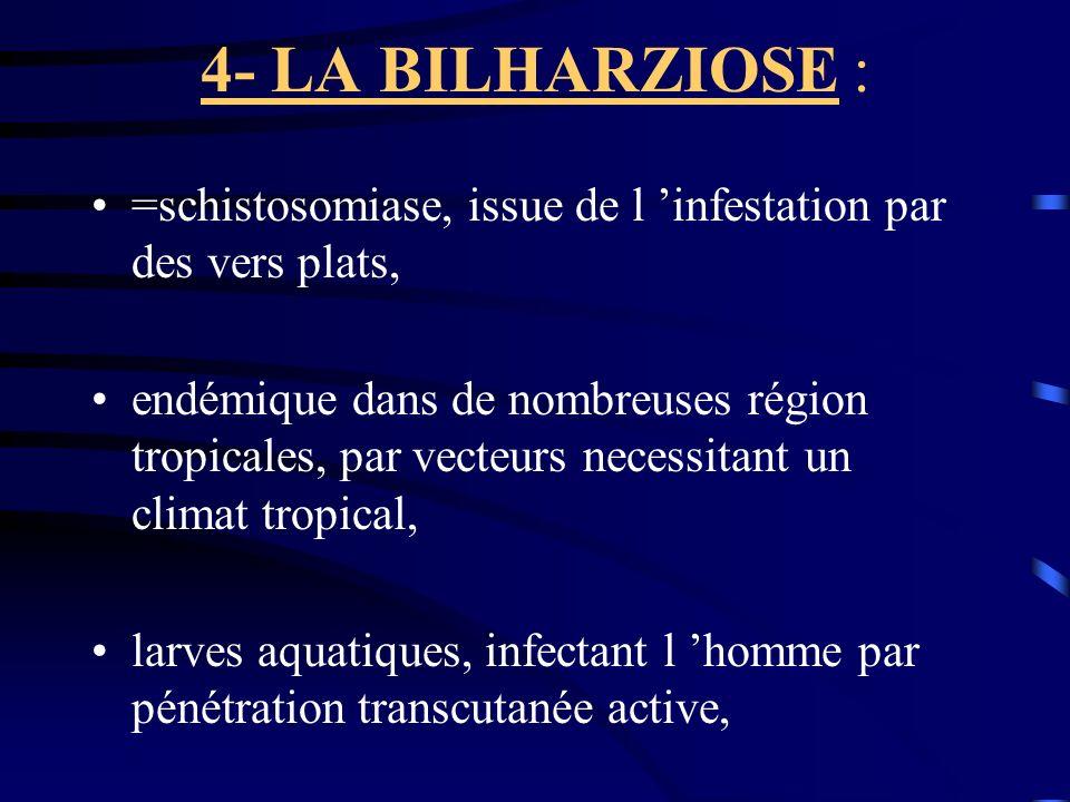 4- LA BILHARZIOSE : =schistosomiase, issue de l infestation par des vers plats, endémique dans de nombreuses région tropicales, par vecteurs necessita