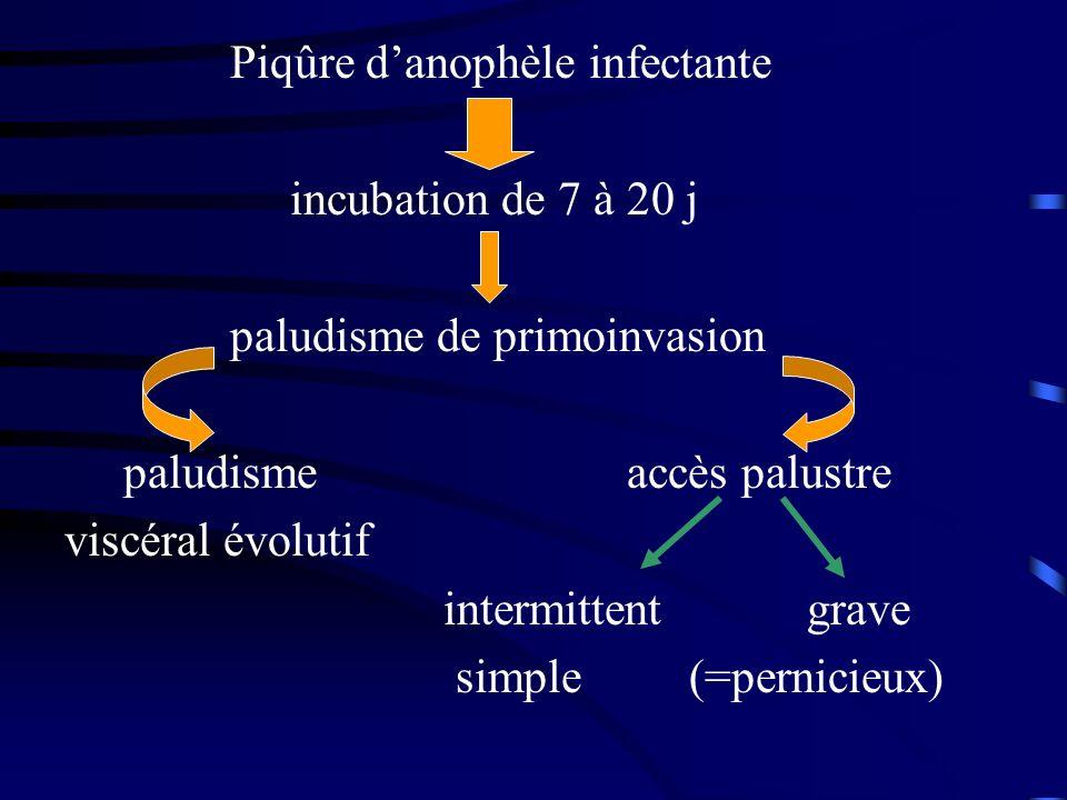 Piqûre danophèle infectante incubation de 7 à 20 j paludisme de primoinvasion paludisme accès palustre viscéral évolutif intermittent grave simple (=p