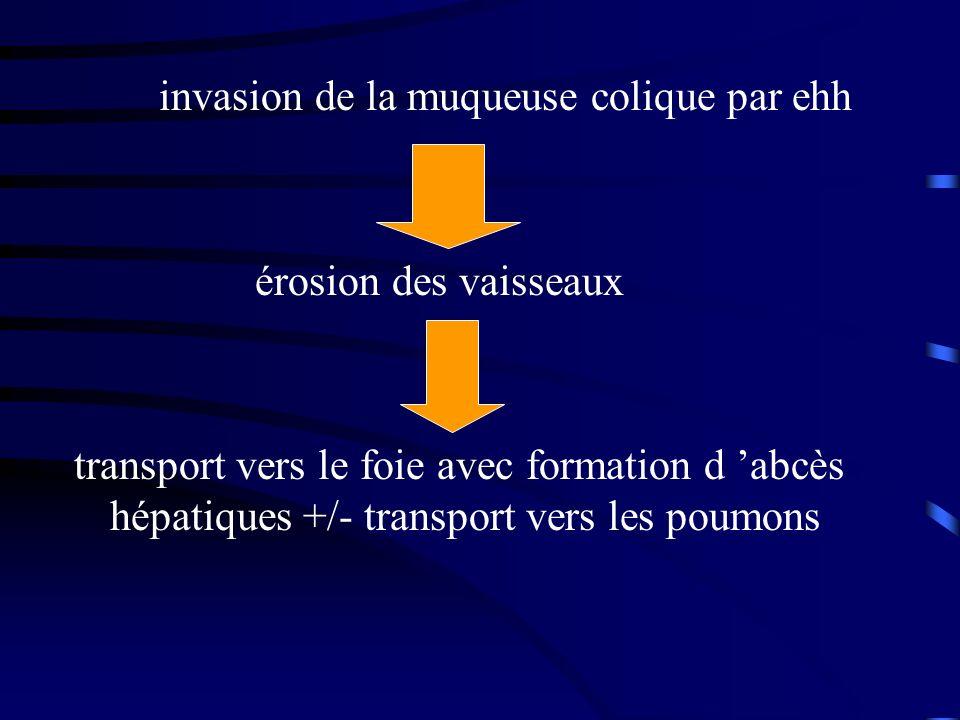 invasion de la muqueuse colique par ehh érosion des vaisseaux transport vers le foie avec formation d abcès hépatiques +/- transport vers les poumons