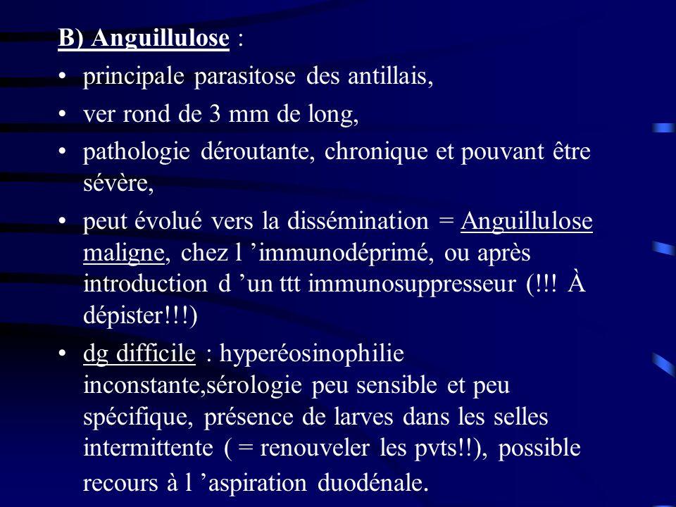 B) Anguillulose : principale parasitose des antillais, ver rond de 3 mm de long, pathologie déroutante, chronique et pouvant être sévère, peut évolué