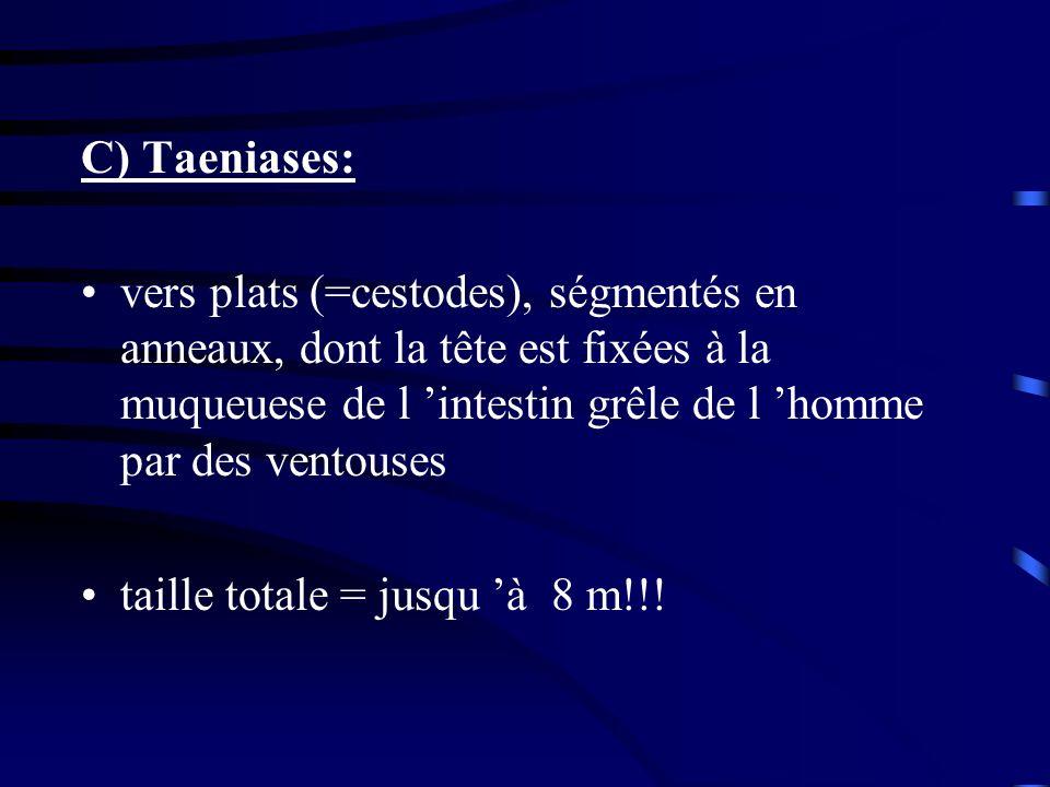 C) Taeniases: vers plats (=cestodes), ségmentés en anneaux, dont la tête est fixées à la muqueuese de l intestin grêle de l homme par des ventouses ta