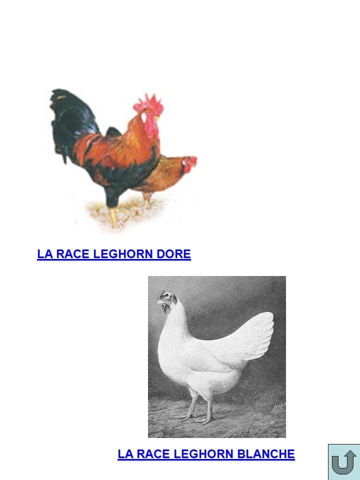 LA RACE LEGHORN DORE LA RACE LEGHORN BLANCHE