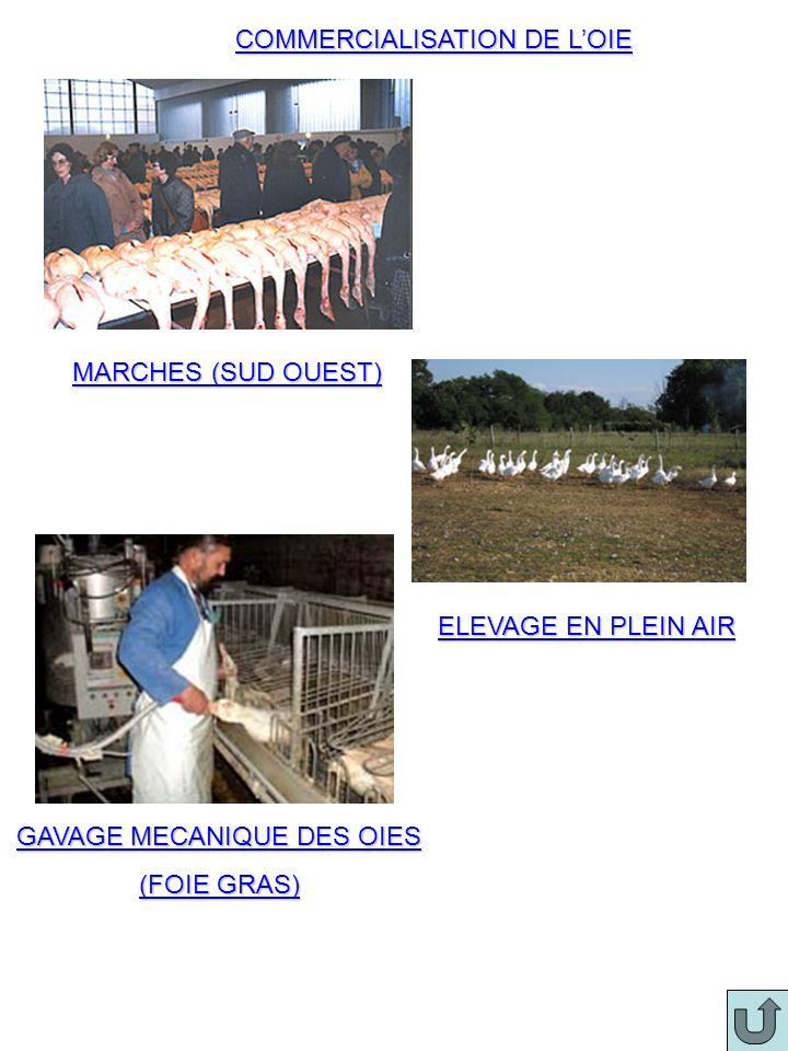 COMMERCIALISATION DE LOIE MARCHES (SUD OUEST) ELEVAGE EN PLEIN AIR GAVAGE MECANIQUE DES OIES (FOIE GRAS)