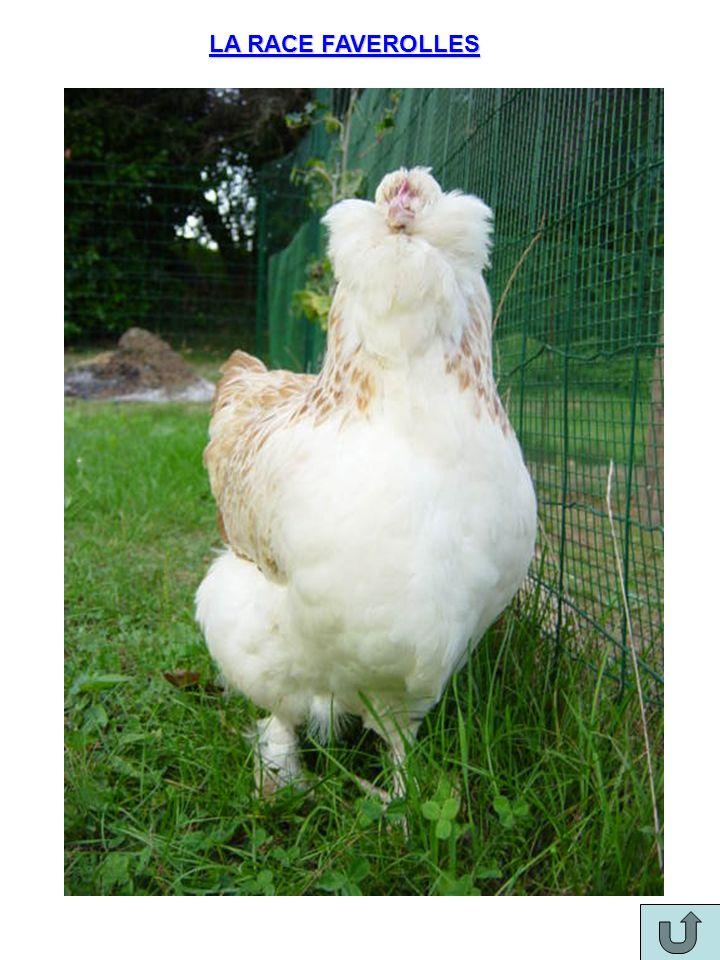 Rappel sur le découpage à cru dune volaille Le poulet est habillé et prêt à être découpé Tailler lintérieur des cuisses pour dégager lavant de la volaille Décrocher le bloc des suprêmes Déplier le bloc des suprêmes vers lavant de la volaille.