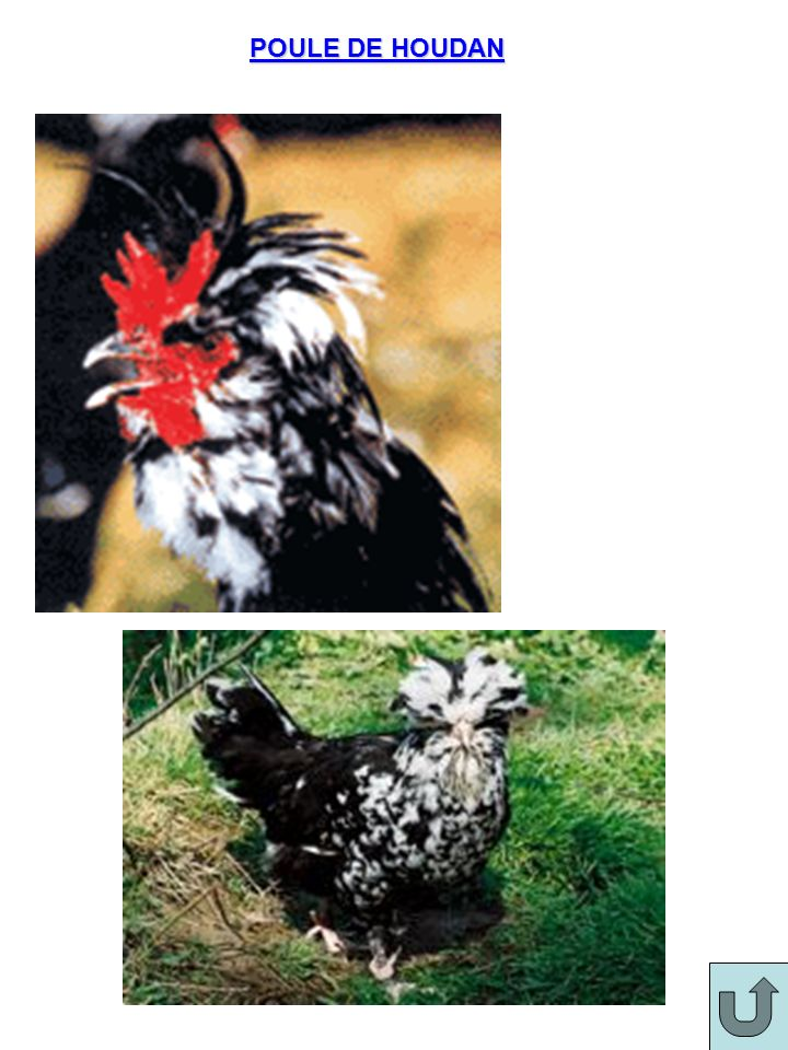 Volailles à chair brune Oie6 mois maxi 3 à 5 kg (Artois) 8 à 10 kg (Toulouse) 1)chair de qualité mais peu grasse 2)Oie de grande taille élevée pour le foie gras et les confits.