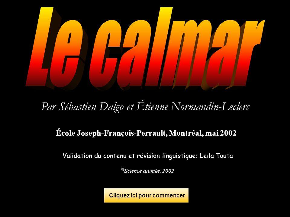 Le calmar loligo Le calmar de lAtlantique (le calmar loligo) est un des membres de la famille des teuthoidés.