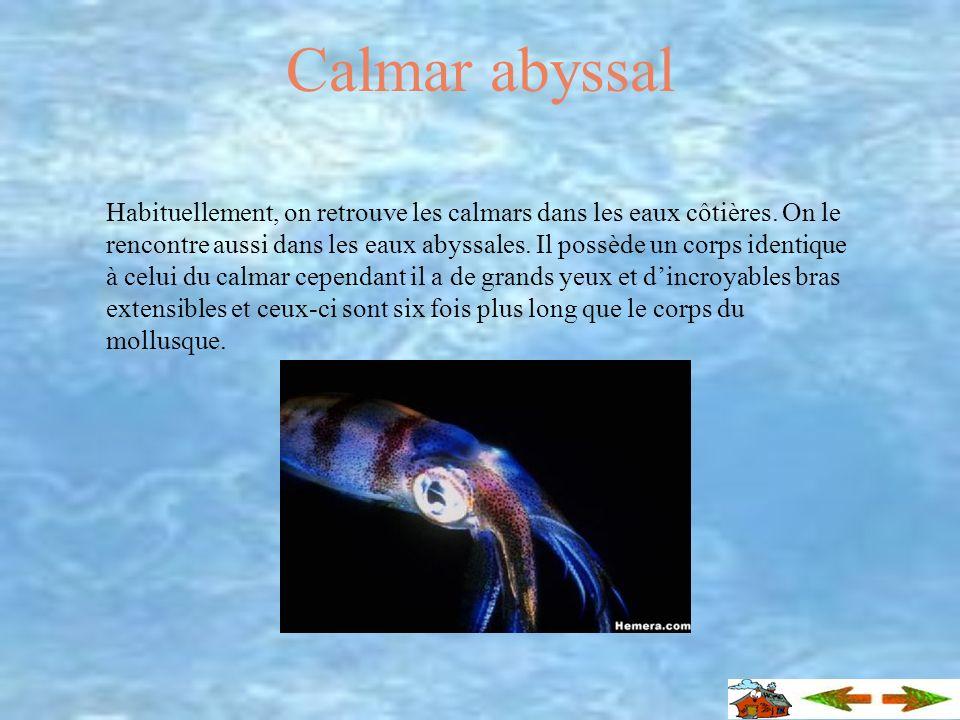Incroyable Savais-tu que... …le calmar descendait d une espèce disparue de mollusque qui devait être aussi dynamique que les cailloux sur lequel ils s