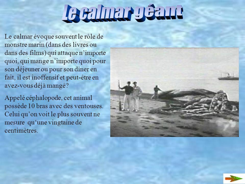 Le calmar loligo Le calmar de lAtlantique (le calmar loligo) est un des membres de la famille des teuthoidés. Ce mollusque en forme de bout de bois, m