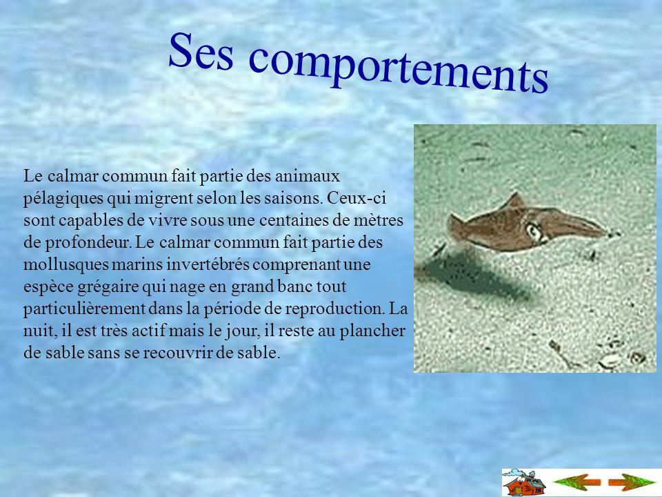 Informations variées Les calmars sont dexcellents nageurs et ils se déplacent par gigantesque banc. Les couleurs du calmar peuvent varier selon son hu