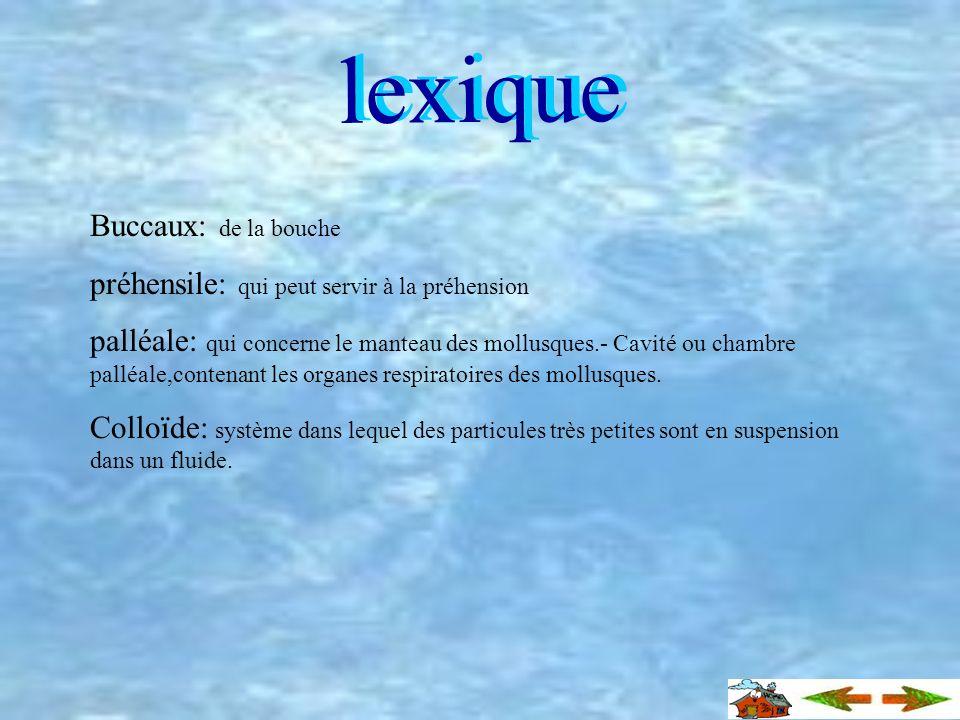 Répartition géographique Le loligo vulgaris se situe dans les mers limitrophes au territoire français. Par contre, cet animal est surtout présent dans