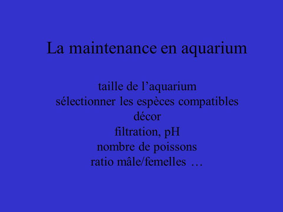 La maintenance en aquarium taille de laquarium sélectionner les espèces compatibles décor filtration, pH nombre de poissons ratio mâle/femelles …