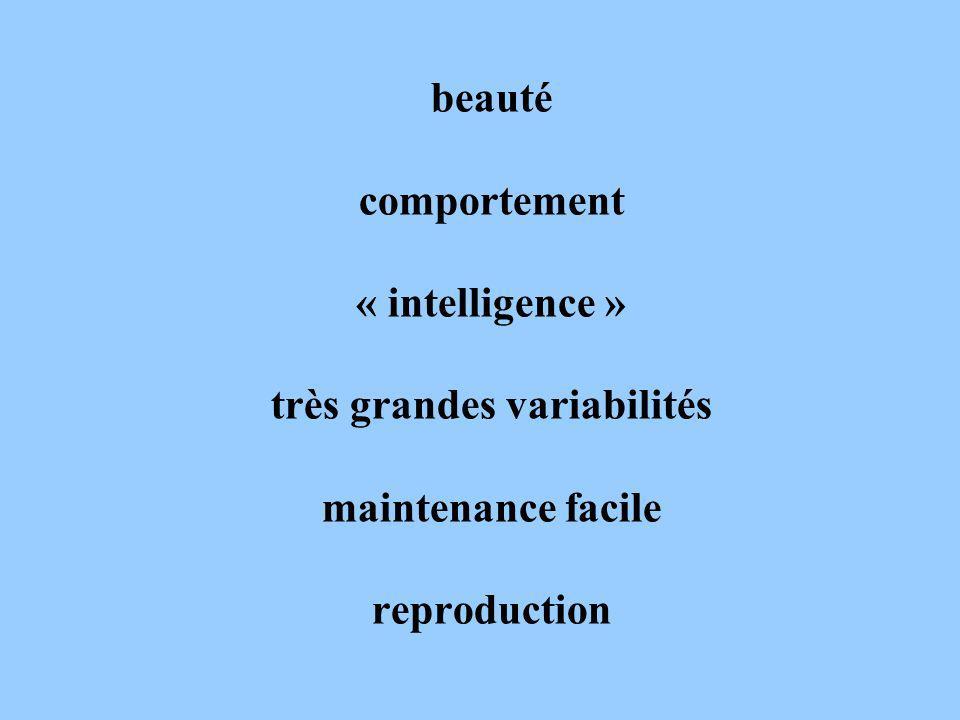 beauté comportement « intelligence » très grandes variabilités maintenance facile reproduction