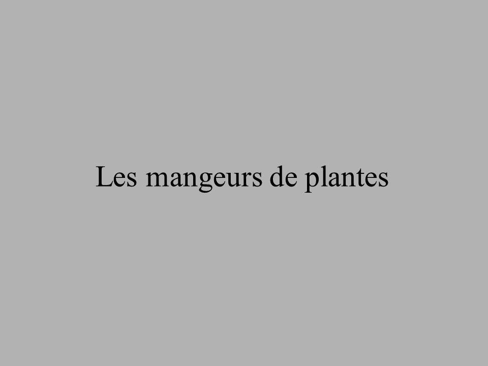 Les mangeurs de plantes