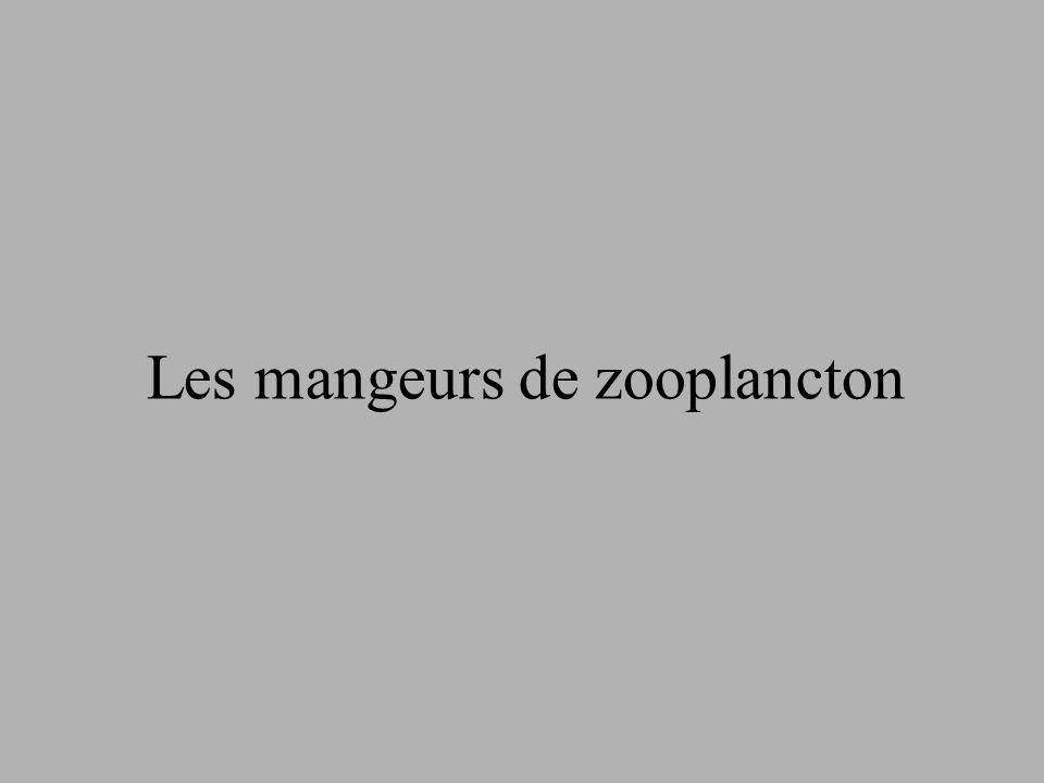 Les mangeurs de zooplancton