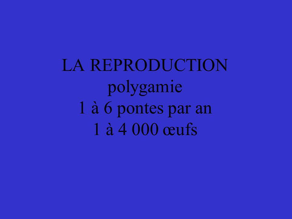 LA REPRODUCTION polygamie 1 à 6 pontes par an 1 à 4 000 œufs