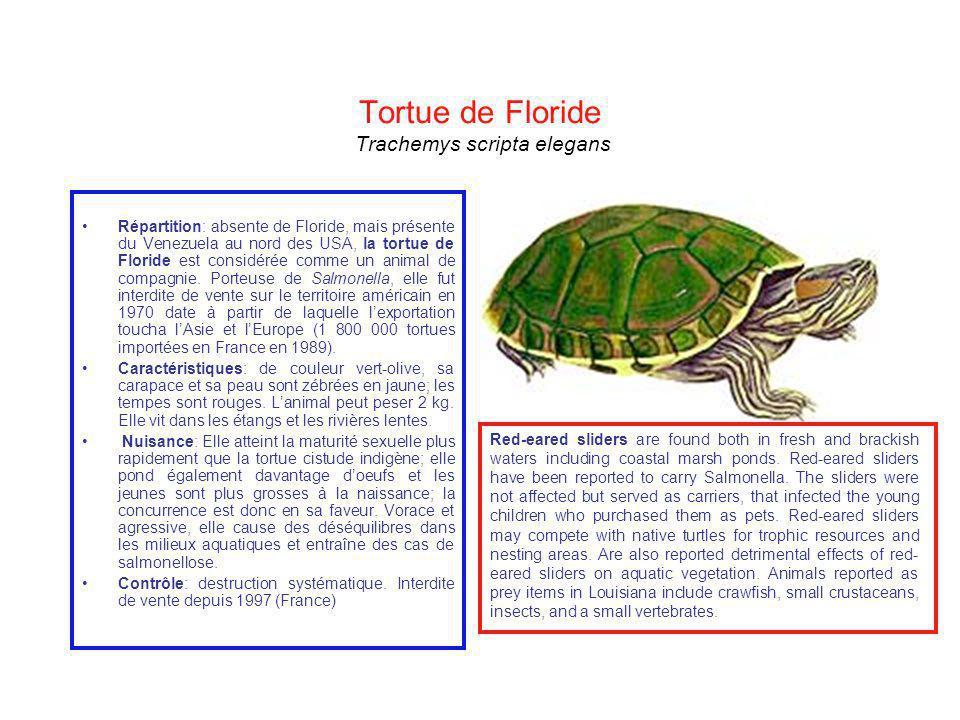 Tortue de Floride Trachemys scripta elegans Répartition: absente de Floride, mais présente du Venezuela au nord des USA, la tortue de Floride est cons