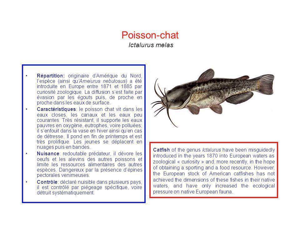 Poisson-chat Ictalurus melas Répartition: originaire dAmérique du Nord, lespèce (ainsi quAmeiurus nebulosus) a été introduite en Europe entre 1871 et