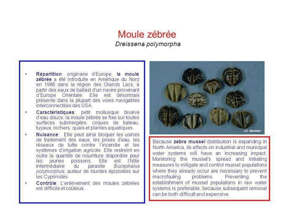 Moule zébrée Dreissena polymorpha Répartition: originaire dEurope, la moule zébrée a été introduite en Amérique du Nord en 1986 dans la région des Gra