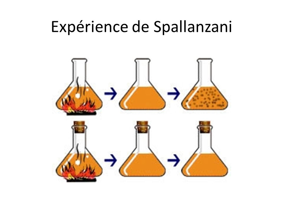 Expérience de Spallanzani