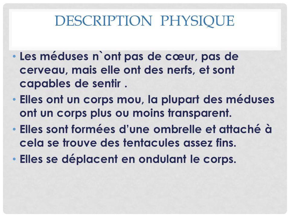 DESCRIPTION PHYSIQUE Les méduses n`ont pas de cœur, pas de cerveau, mais elle ont des nerfs, et sont capables de sentir. Elles ont un corps mou, la pl