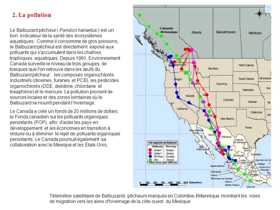 C) Des phénomènes transfrontaliers 1. Les migrations « Selon le ministère mexicain des Affaires étrangères (Secretaria de Relaciones Exteriores, 1993)
