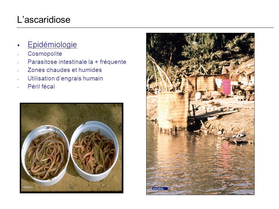Epidémiologie - Cosmopolite - Parasitose intestinale la + fréquente - Zones chaudes et humides - Utilisation dengrais humain - Péril fécal Lascaridios
