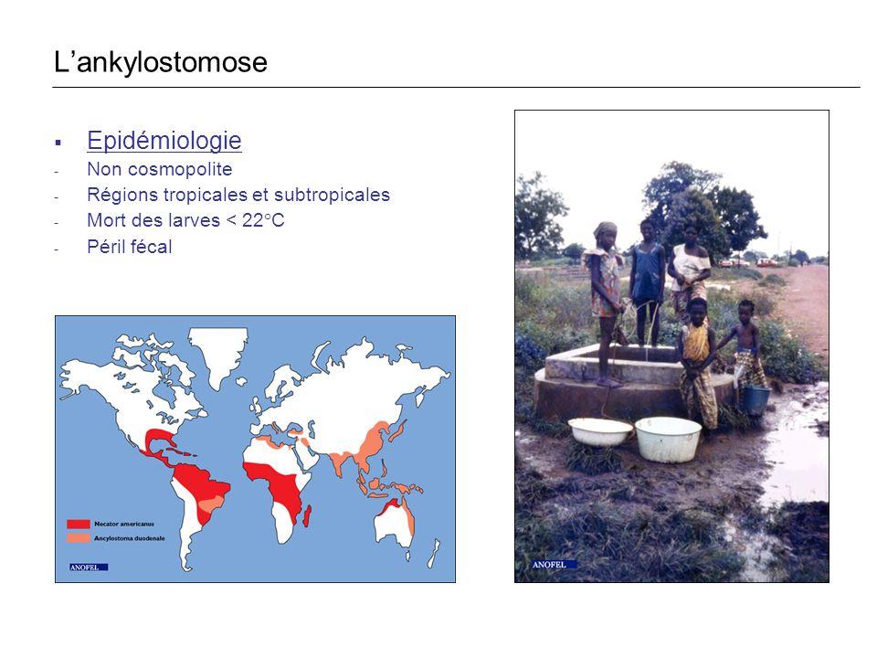 Epidémiologie - Non cosmopolite - Régions tropicales et subtropicales - Mort des larves < 22°C - Péril fécal Lankylostomose