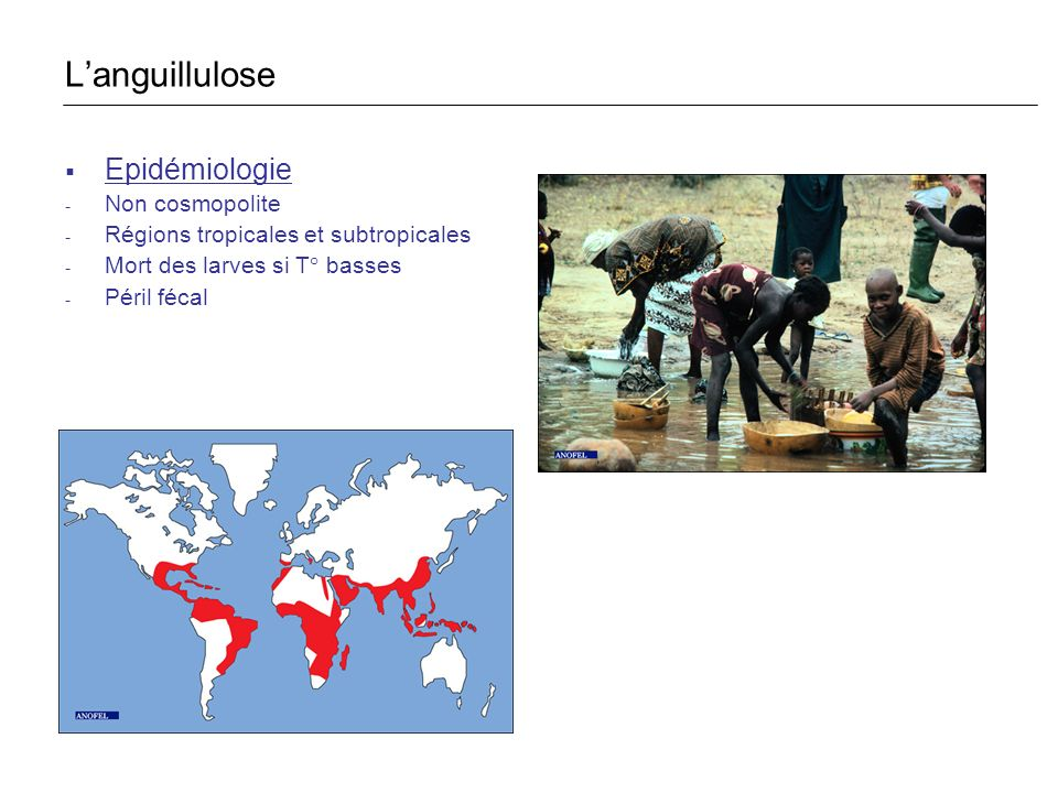 Epidémiologie - Non cosmopolite - Régions tropicales et subtropicales - Mort des larves si T° basses - Péril fécal Languillulose
