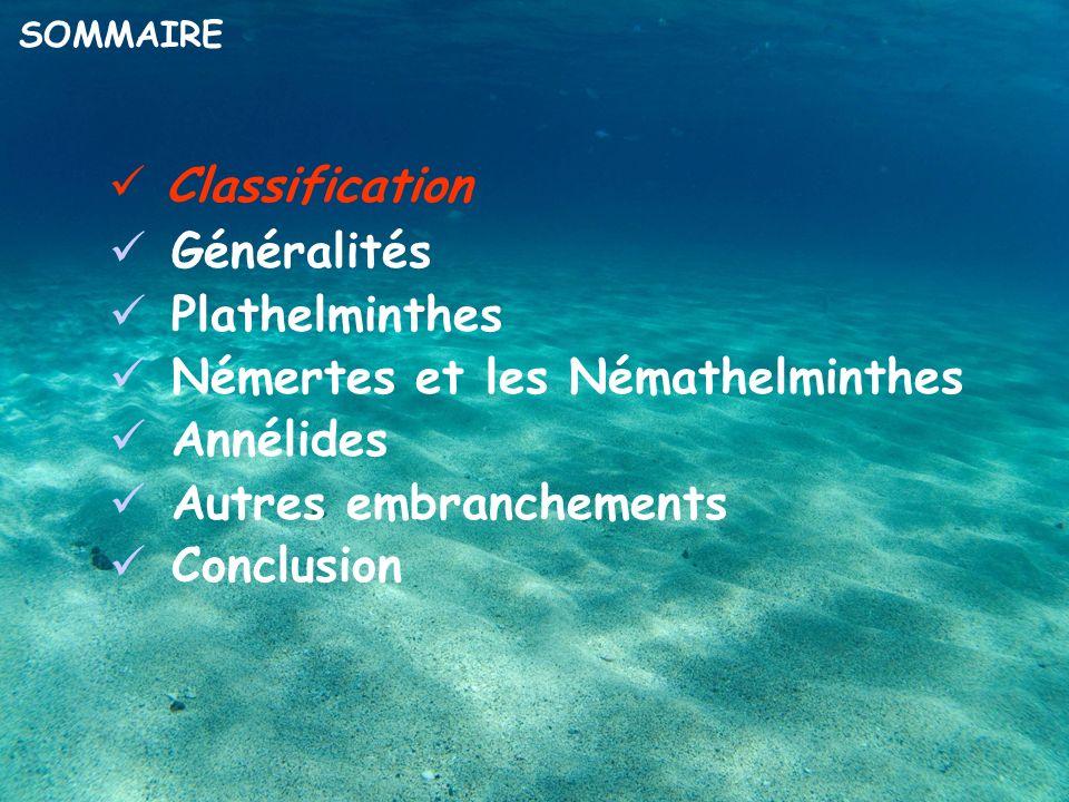 Classification Généralités Plathelminthes Némertes et les Némathelminthes Annélides Autres embranchements Conclusion SOMMAIRE