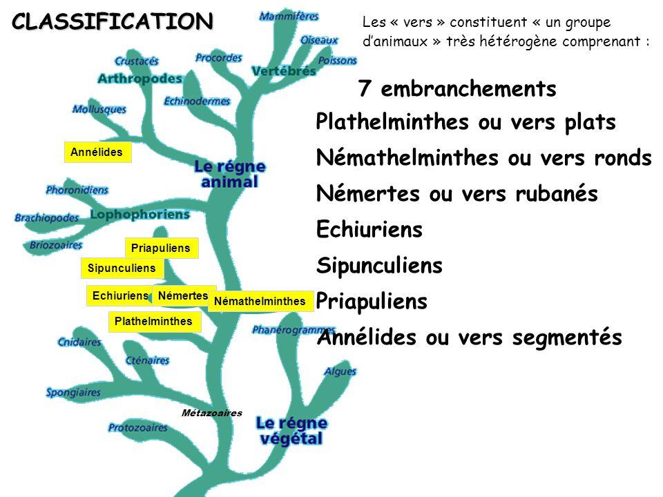 Métazoaires CLASSIFICATION Plathelminthes ou vers plats 7 embranchements Némertes ou vers rubanés Némathelminthes ou vers ronds Priapuliens Echiuriens