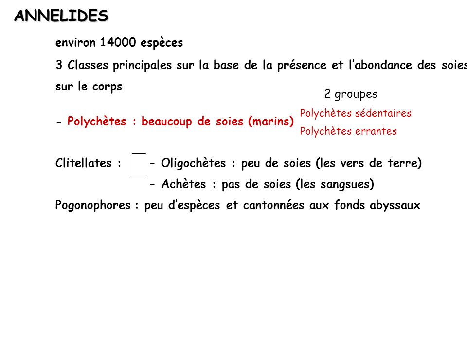 ANNELIDES environ 14000 espèces 3 Classes principales sur la base de la présence et labondance des soies sur le corps - Polychètes : beaucoup de soies