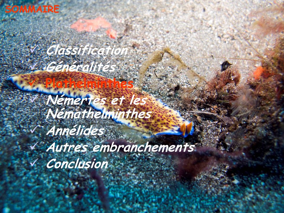 Vie nocturne Camouflage (ombre, transparence) Utilisation de tubes membraneux ou calcaires Couleurs vives Toxines Enfouissement Mimétisme (couleur du fond, ressemblance avec des limaces) STATÉGIE DE DÉFENSE PREDATEURS PREDATEURS : Plathelminthes : aucuns, Annélides : Errants : Crustacés, Poissons Sédentaires : Annélides errants,Crustacés, Poissons Échiuriens : Annélides errants