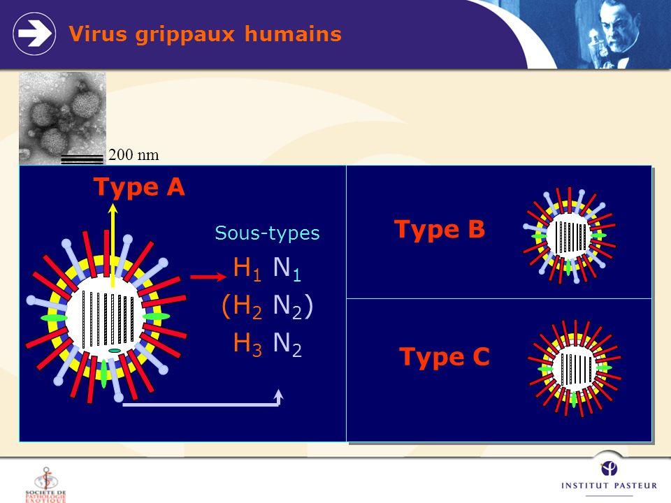 Risque de réassortiment Si une épidémie de grippe humaine dans une région dure en moyenne 12 semaines Si la prévalence dans la population totale de cette grippe humaine sur cette période est de 10% Si la fenêtre de co-infection par un virus avaire pendant la phase précoce de linfection grippale par un virus humain est de 1 jour Alors la proportion de la population suceptible dabriter une co-infection est de 0,12% Public Health Risk from the Avian H5N1 Influenza Epidemic Neil M.