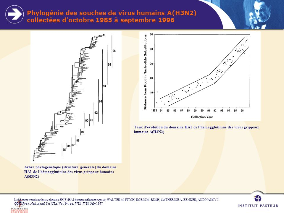 Phylogénie des souches de virus humains A(H3N2) collectées doctobre 1985 à septembre 1996 Long term trends in the evolution of H(3) HA1 human influenz