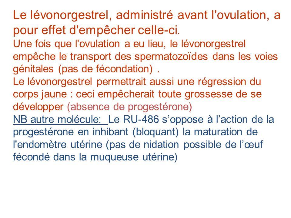 Le lévonorgestrel, administré avant l'ovulation, a pour effet d'empêcher celle-ci. Une fois que l'ovulation a eu lieu, le lévonorgestrel empêche le tr