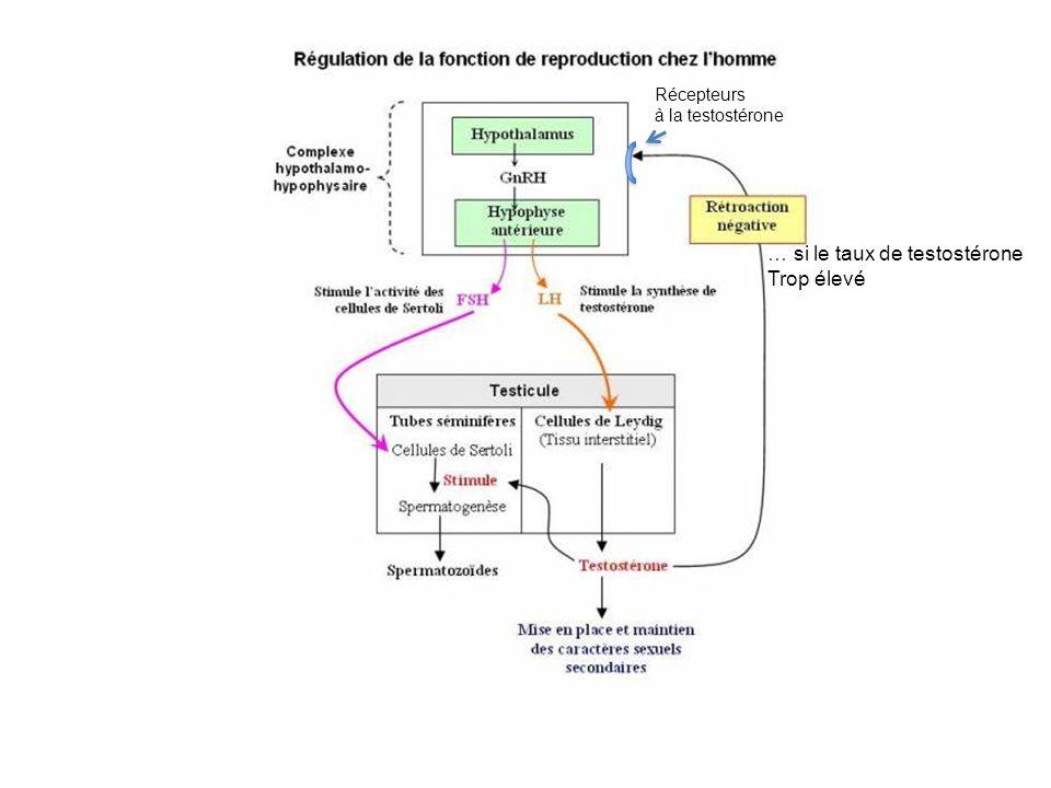Régulation des hormones sexuelles chez la Femme