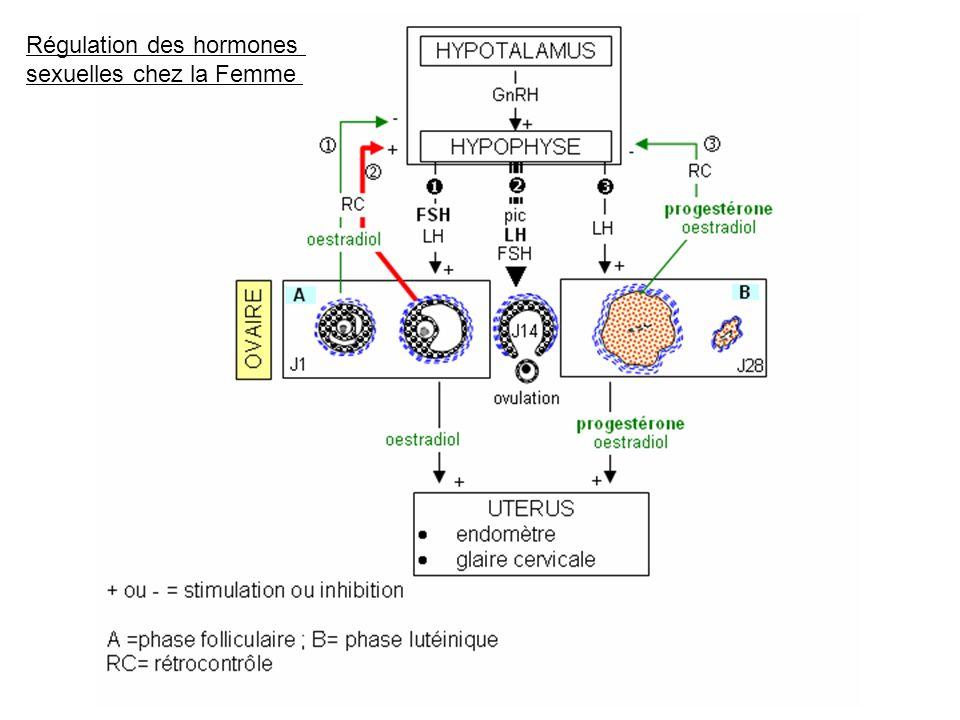B) Une assistance à la procréation Linsémination artificielle : déposer des spermatozoïdes dans la cavité utérine de la femme.