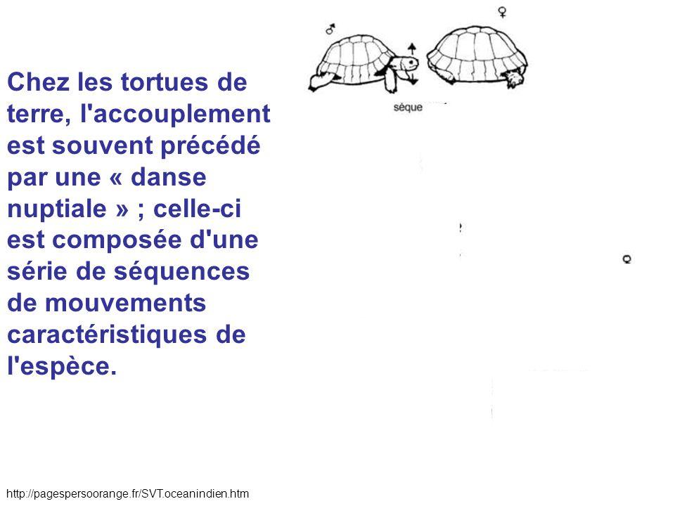 Chez les tortues de terre, l'accouplement est souvent précédé par une « danse nuptiale » ; celle-ci est composée d'une série de séquences de mouvement