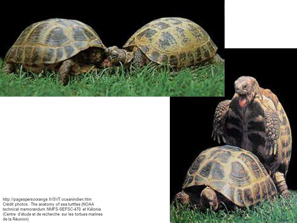 Crédit photos : The anatomy of sea turttles (NOAA technical memorandum NMFS-SEFSC-470 et Kélonia (Centre d'étude et de recherche sur les tortues marin